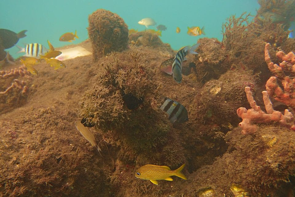 Tropical fish on snorkel trail