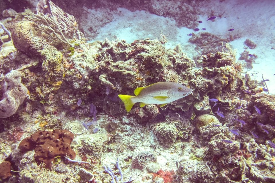 Cozumel Reef and fish  from dive trip