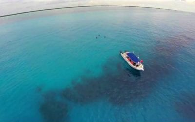 Cozumel Dive Guide & Interactive Map – Everything You Need to Know Above and Below the Water