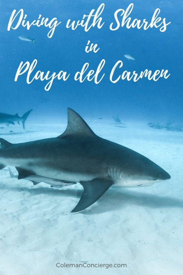 Bull Sharks Playa del Carmen