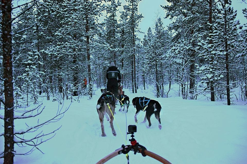 Dog sledding Norway