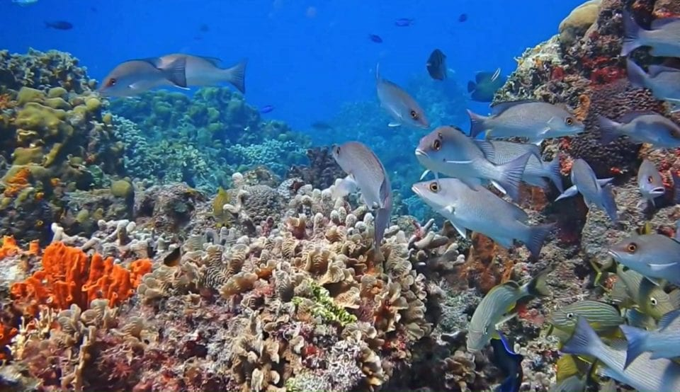 School of fish and coral reef Cozumel via Scuba Life Cozumel