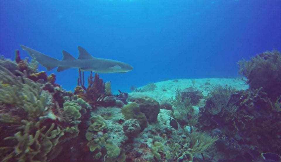 Shark Cozumel via Scuba Life Cozumel