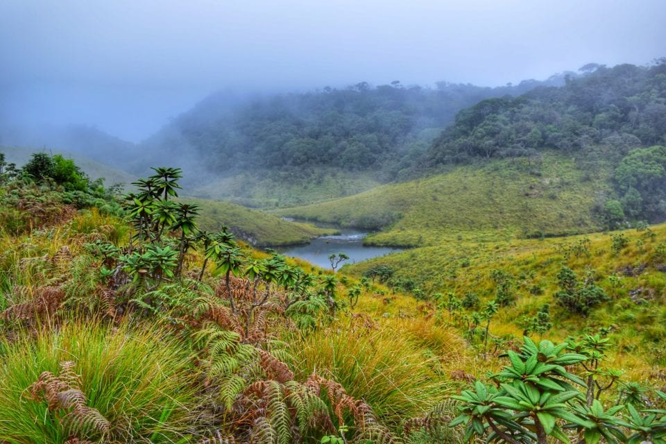 Mists over Horton Plains National Park - Photo by Rachita Saxena @ Nomllers