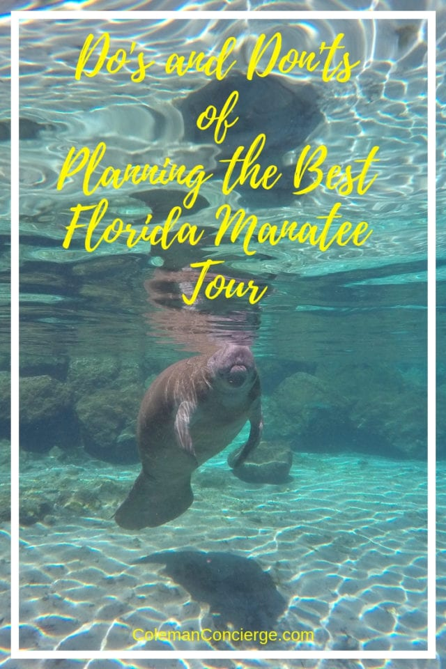 Manatee in Crystal River Florida