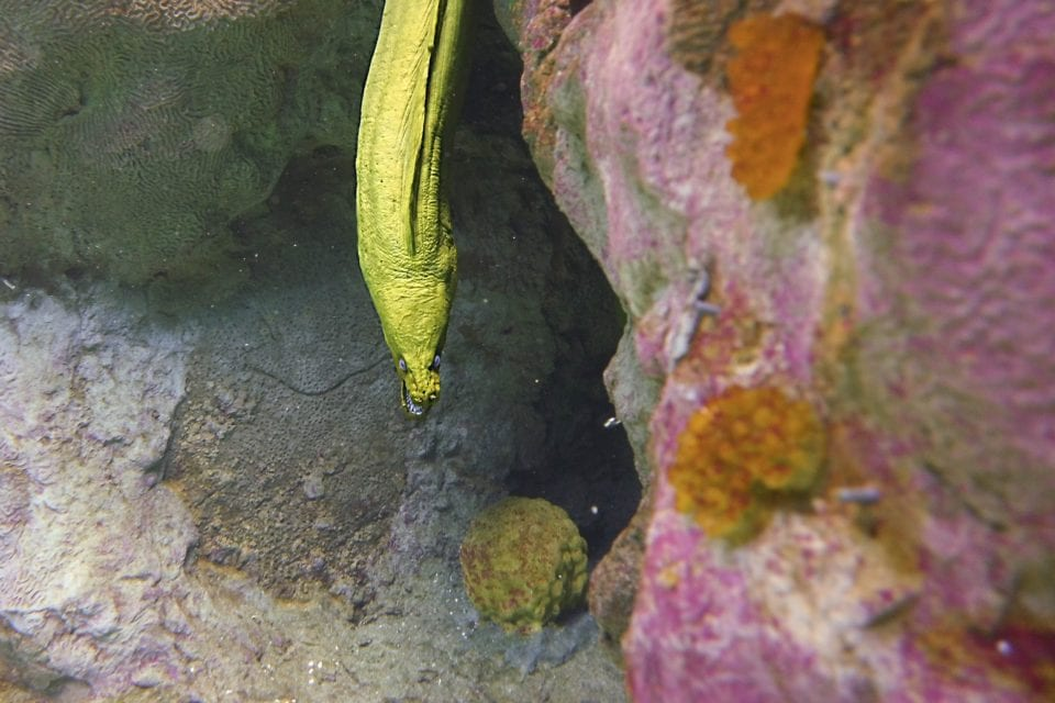 Eel in the coral reef