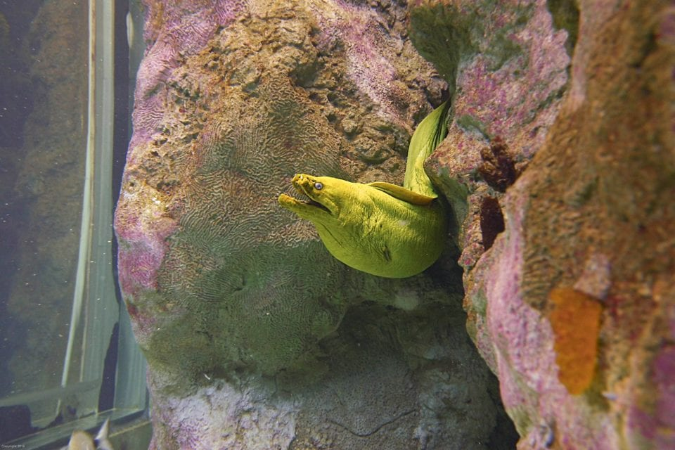Eel hiding the the reef