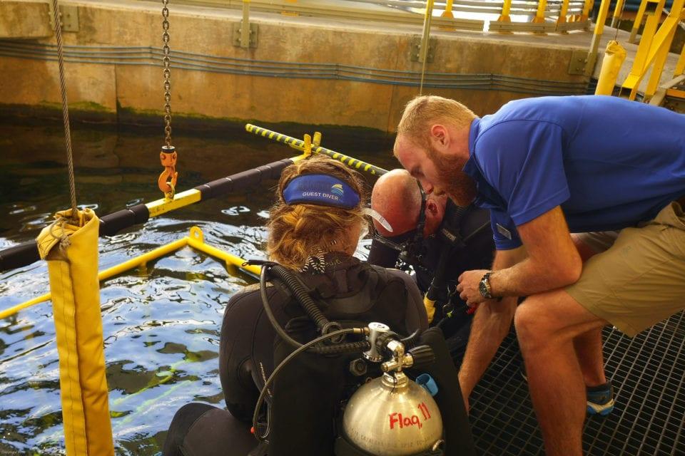 Katie entering shark tank