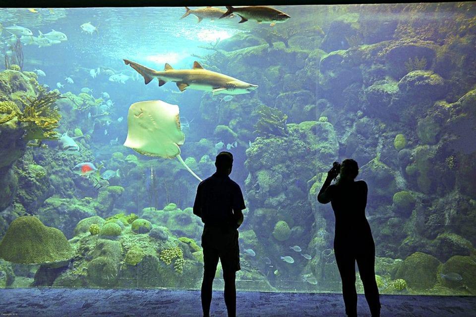 Katie taking photos of Aquarium