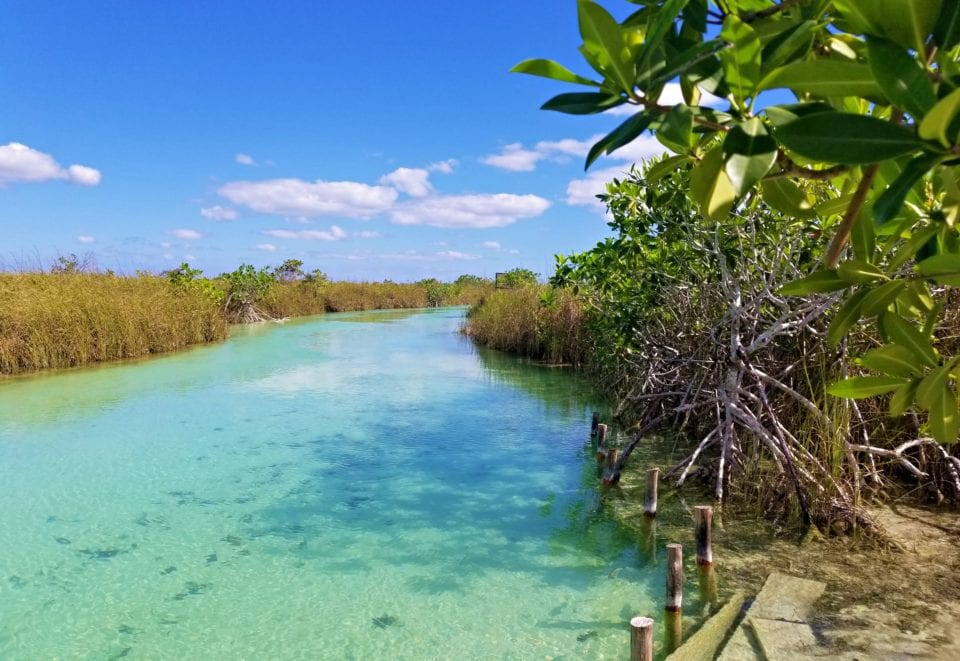 Lagoon river channel Sian Kaan Biosphere