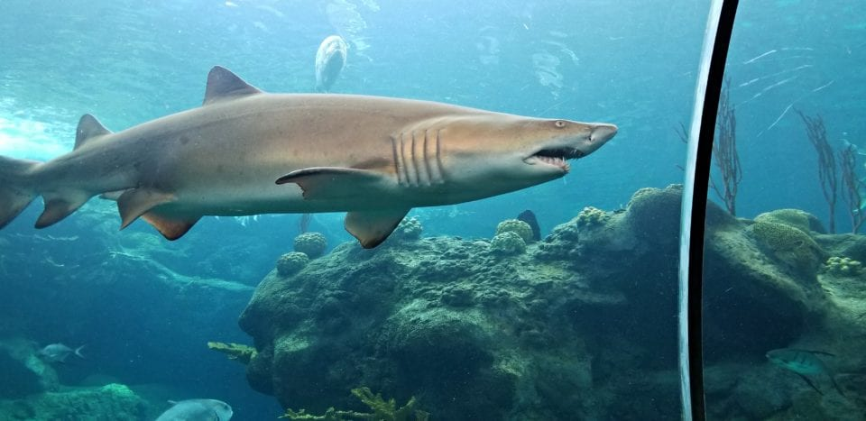 People spy on sharks