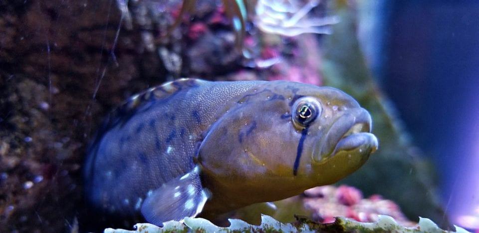 Small tropical fish Florida Aquarium