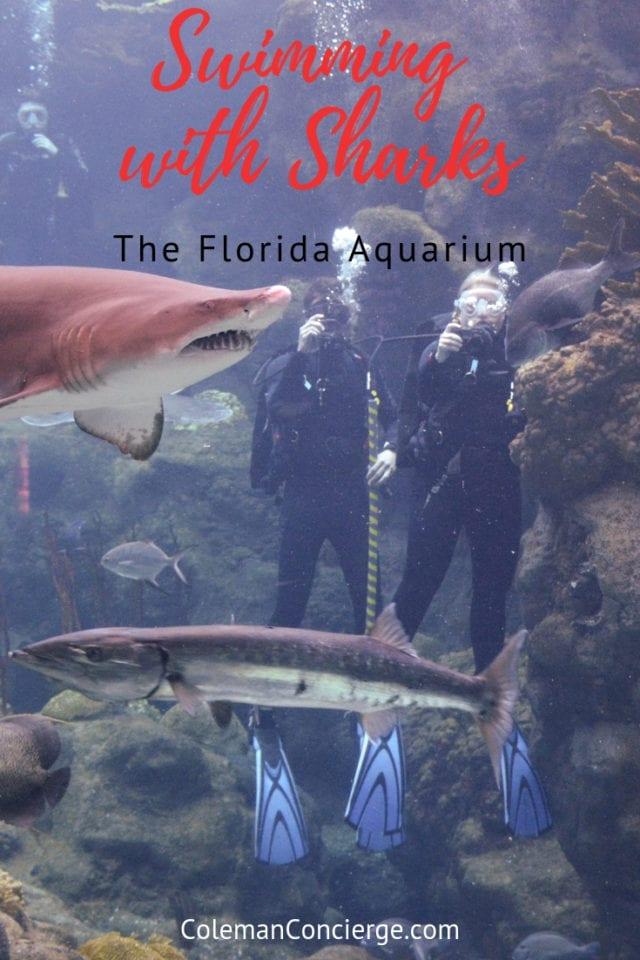 scuba Diving in the Coral reef exhibit the Florida Aquarium