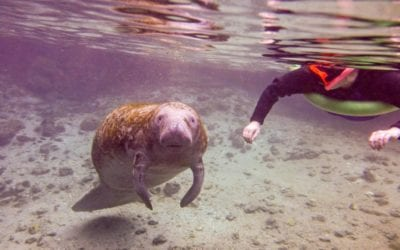 Do's and Don'ts of Planning a Swim with Manatee Tour