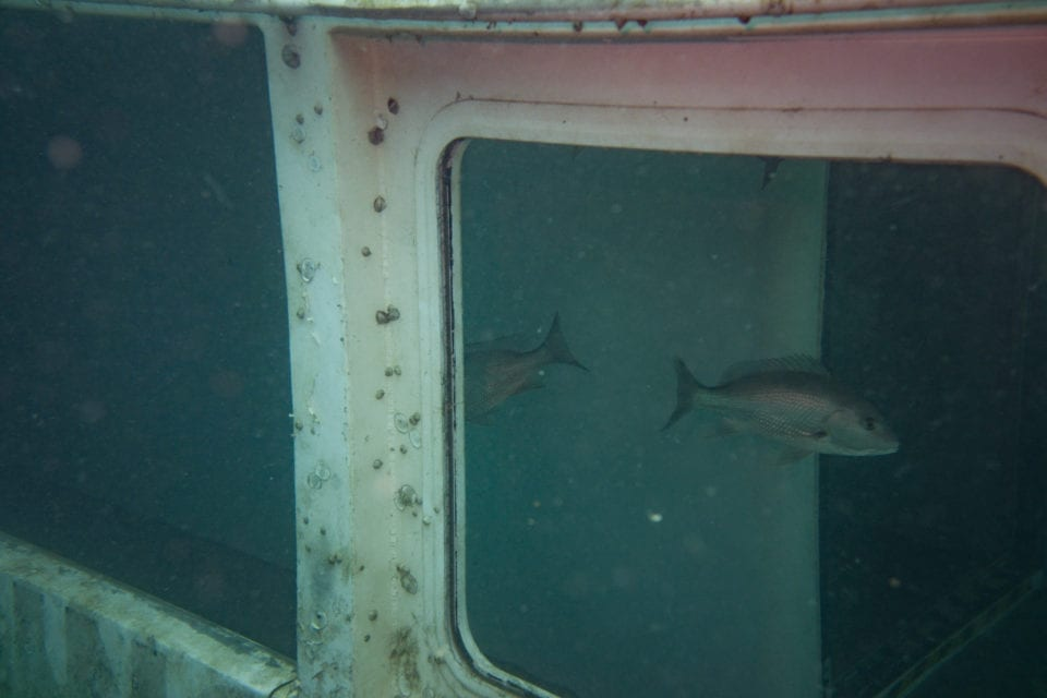 Looking into the hull of the El Dorado