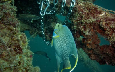 Scuba Diving In Panama City Beach- Complete Guide and Interactive Map