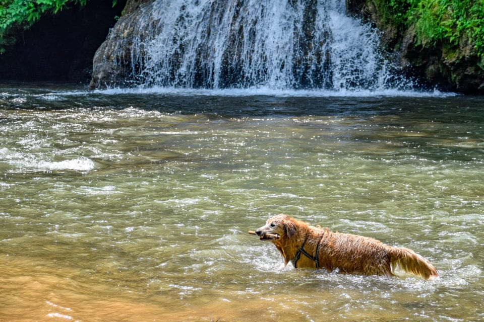 Shenandoah Campground waterfall with retriever
