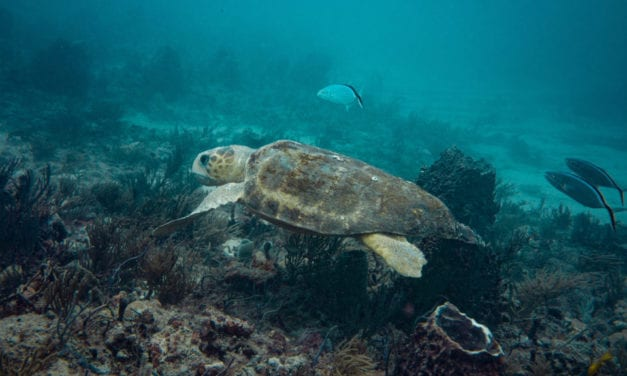 Scuba Diving West Palm Beach – Florida's Underwater Turtle Trek