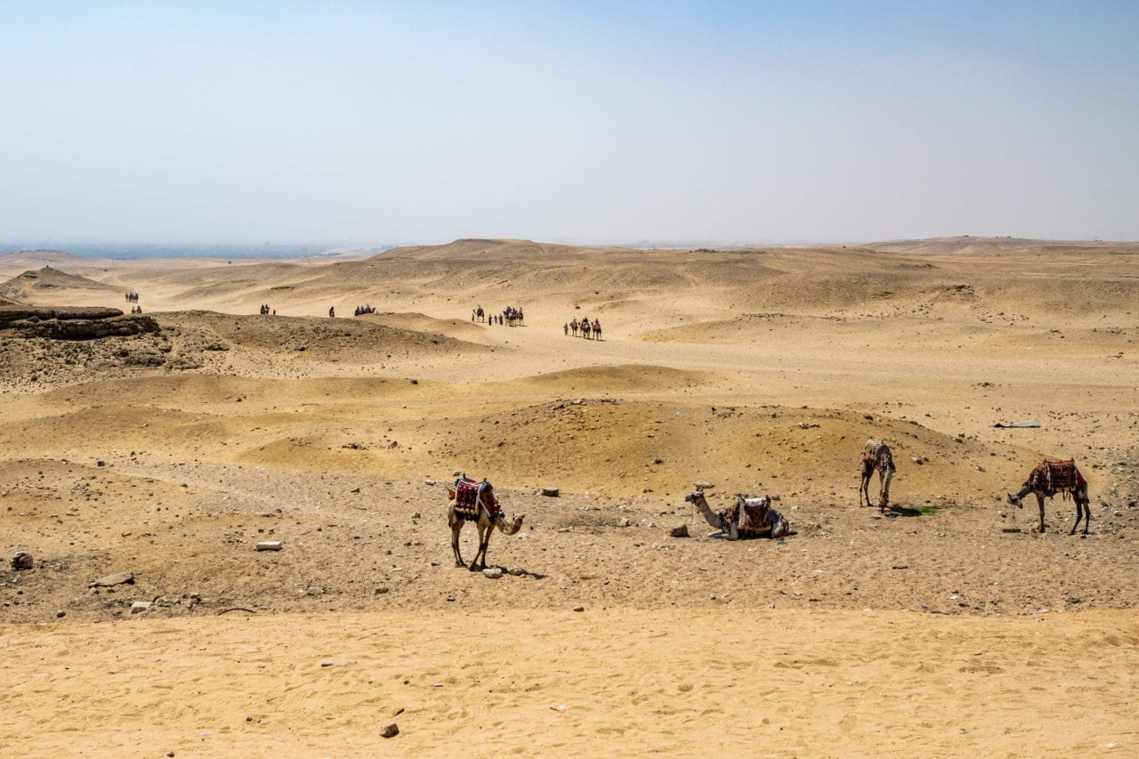 Camels at the Great Pyramid