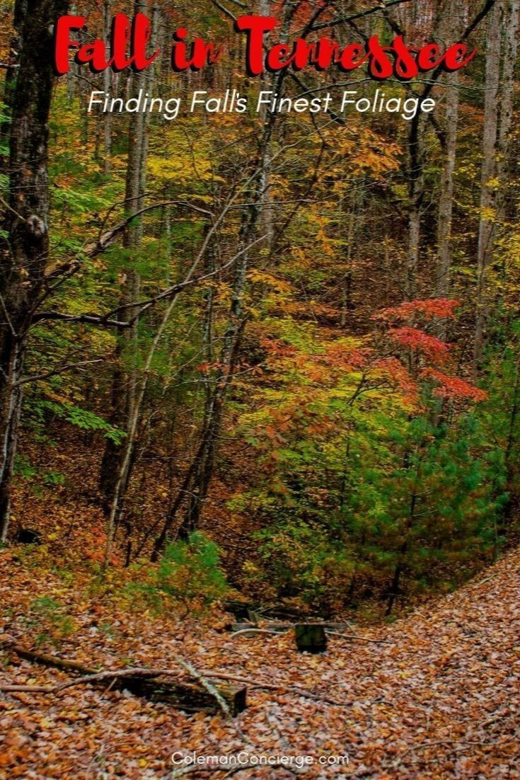 Tennessee in Fall