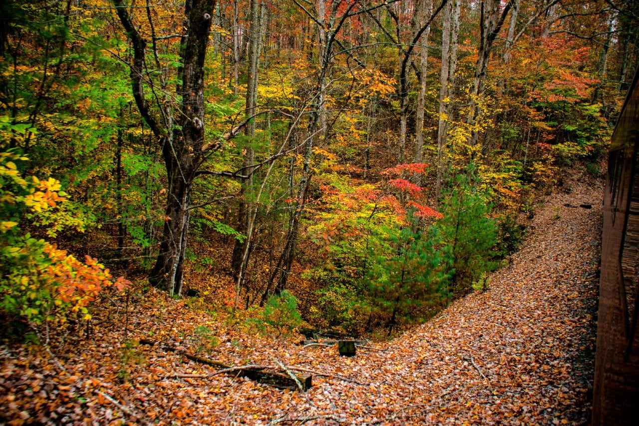 Tennessee in the Fall via Canva