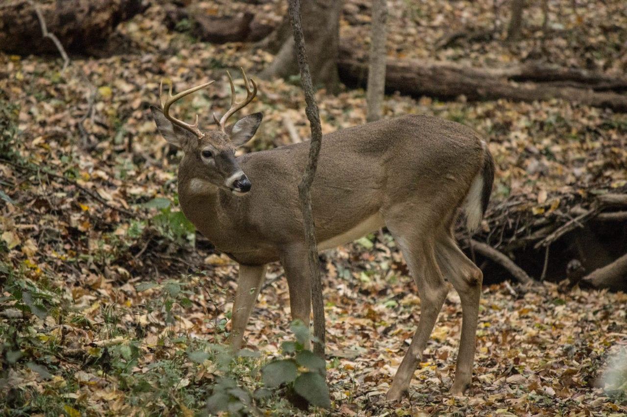 Deer via Ashley Hubbard