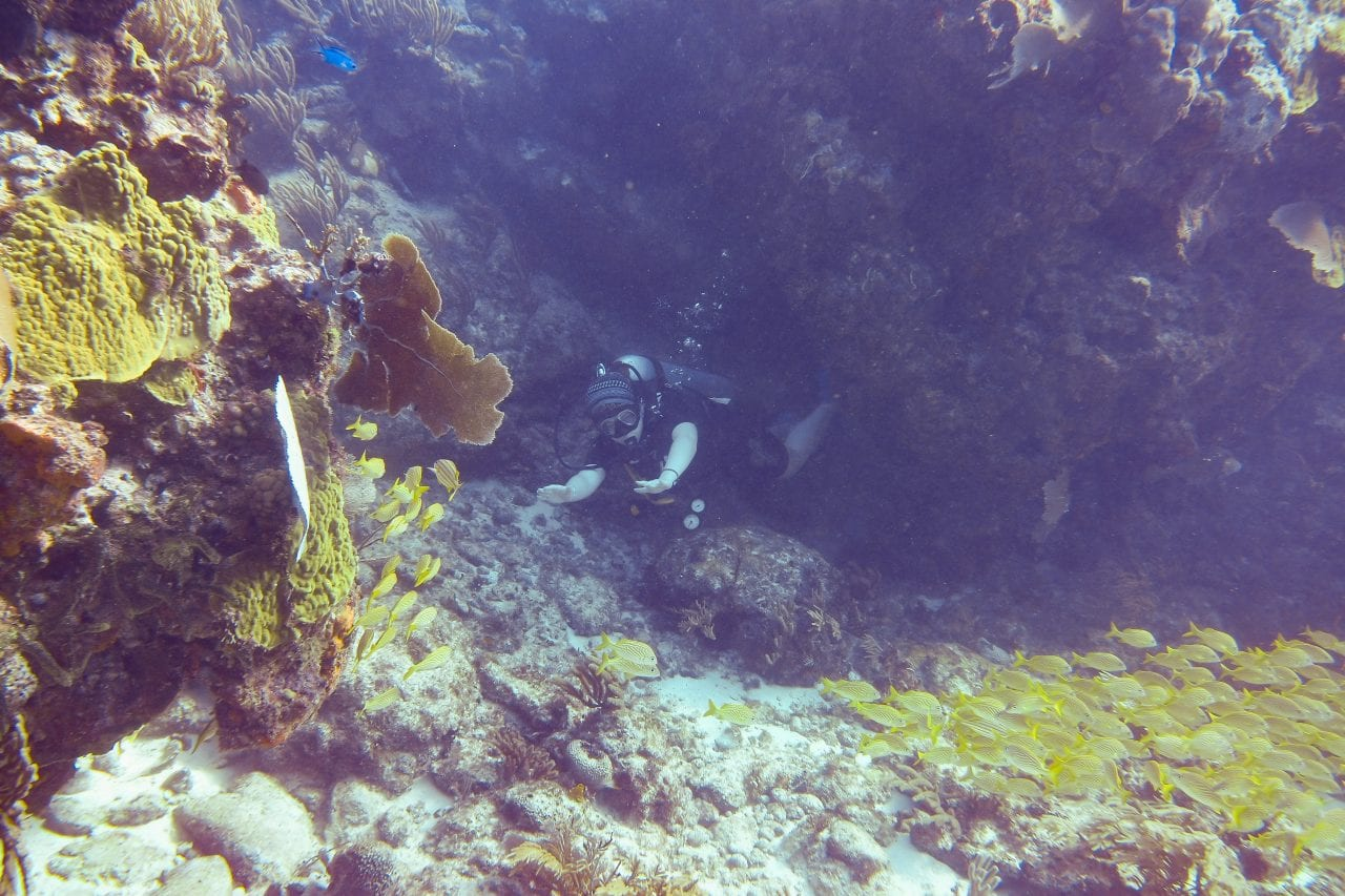 Scuba diver going through a coral swim through