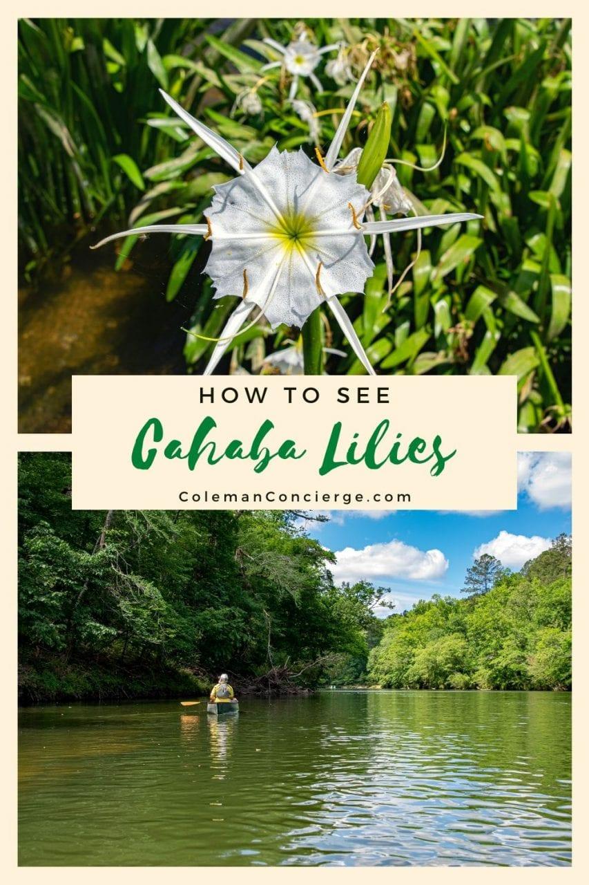 Cahaba lilies