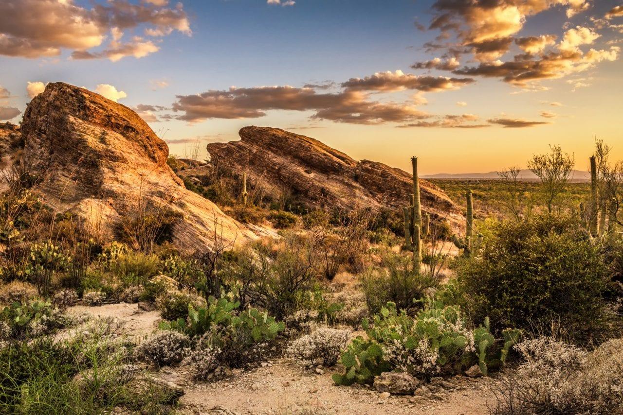 Javalina Rocks-Saguaro East_dreamstime_m_76135940ID 76135940 © Miroslav Liska | Dreamstime.com