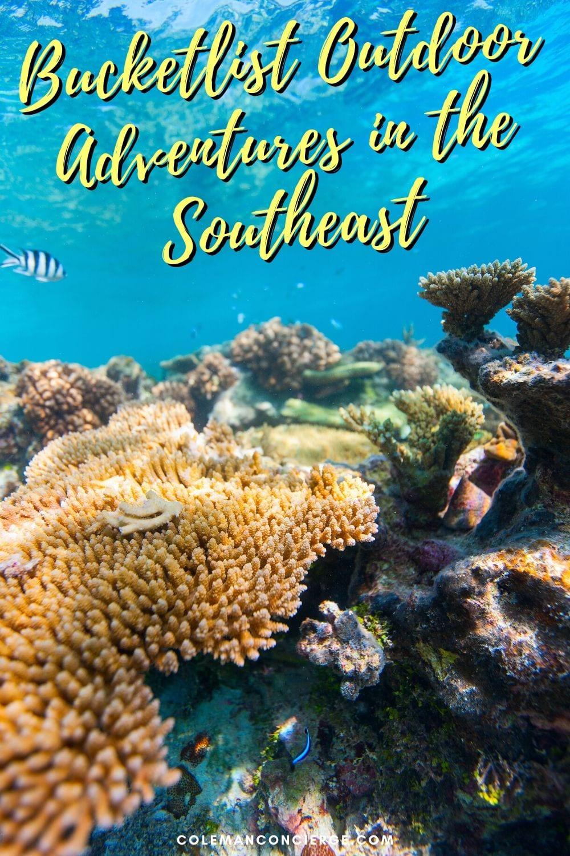 Florida Scuba Diving