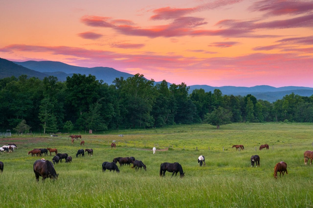 Cades Cove Sunset horses via Canva