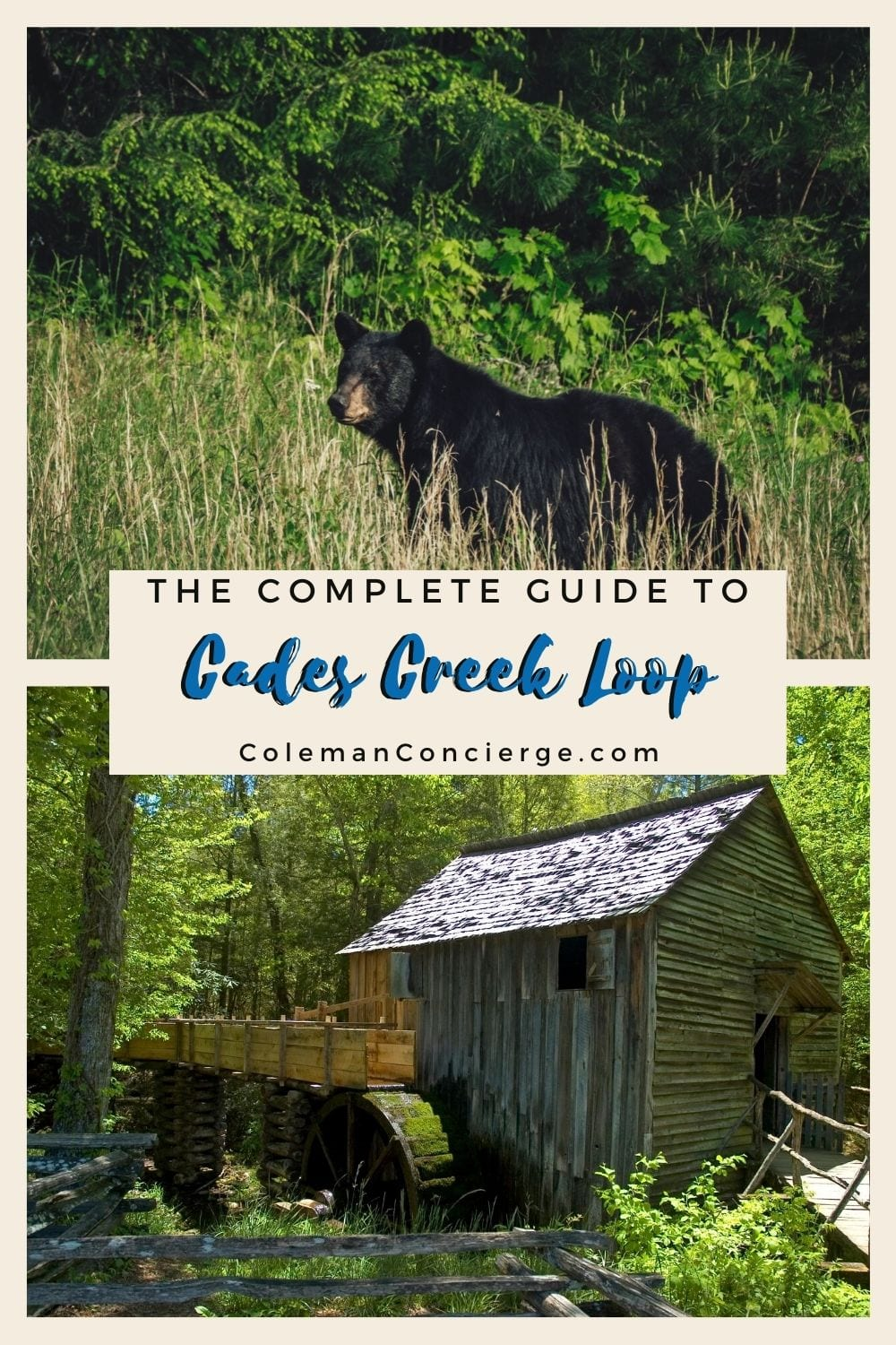 Black bear and historic cabin Cades Cove