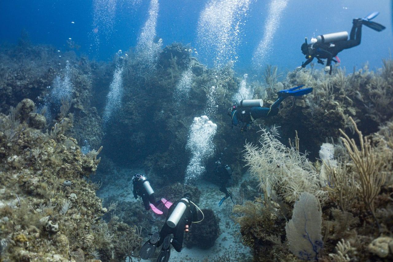 """Divers entering """"The Church"""" on Dog Rocks Wall"""