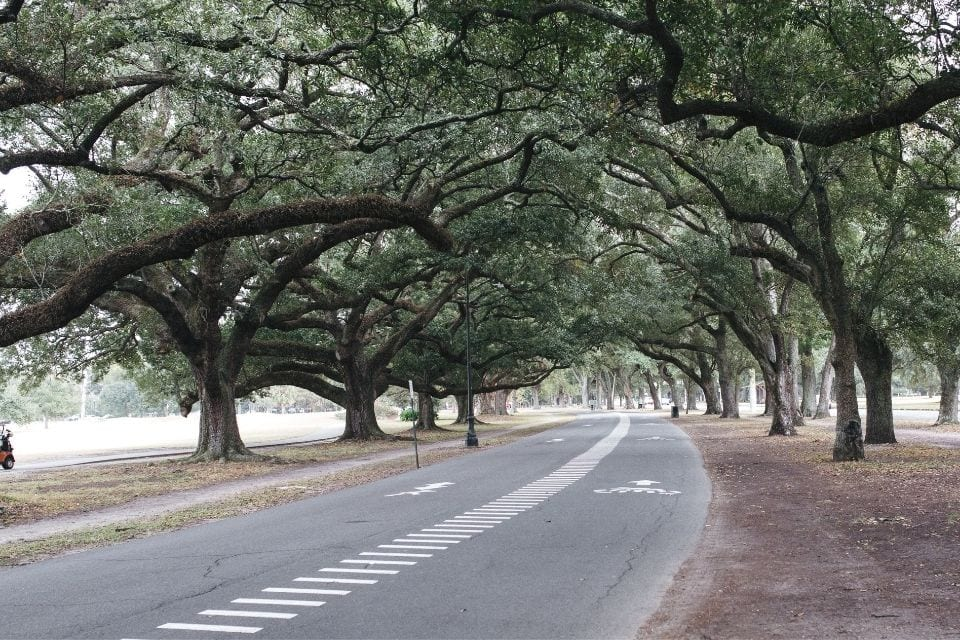 Audubon Park Bike Trail via Canva (not actually the MRT, but you can make a lap while your there...)