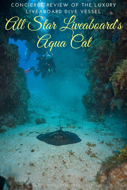 Diver and stingray Bahamas