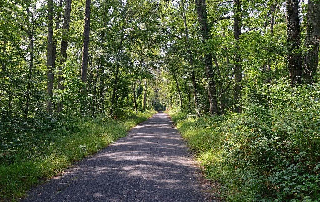 Fôret_de_Fontainebleau via wikicommons