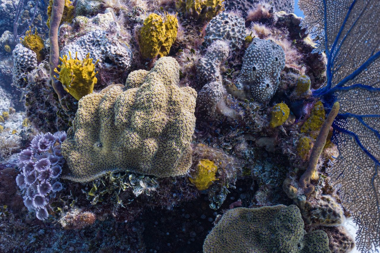 Colorful soft corals on a Nassau dive