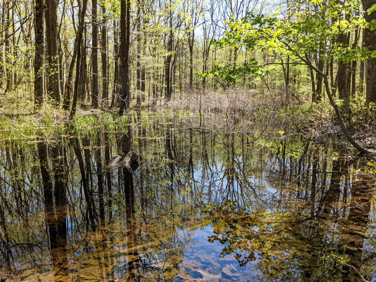 Bog Trail Huntsville
