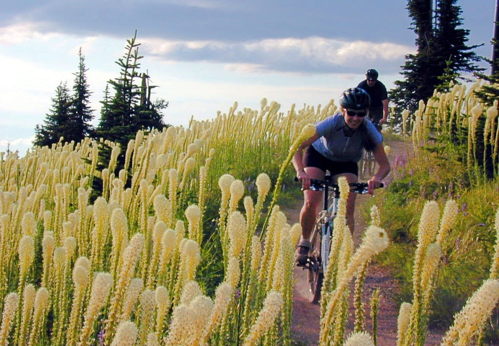 Mountain biking through the bear grass on Big Mountain above Whitefish by Brian Schott