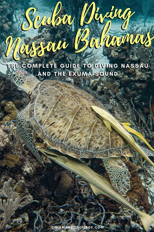 Remoras on a Sea Turtle