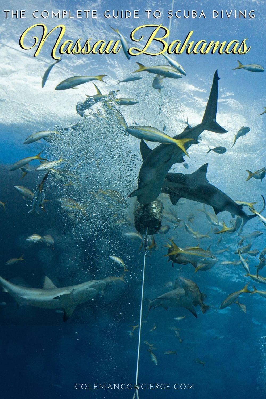 Shark feed Bahamas