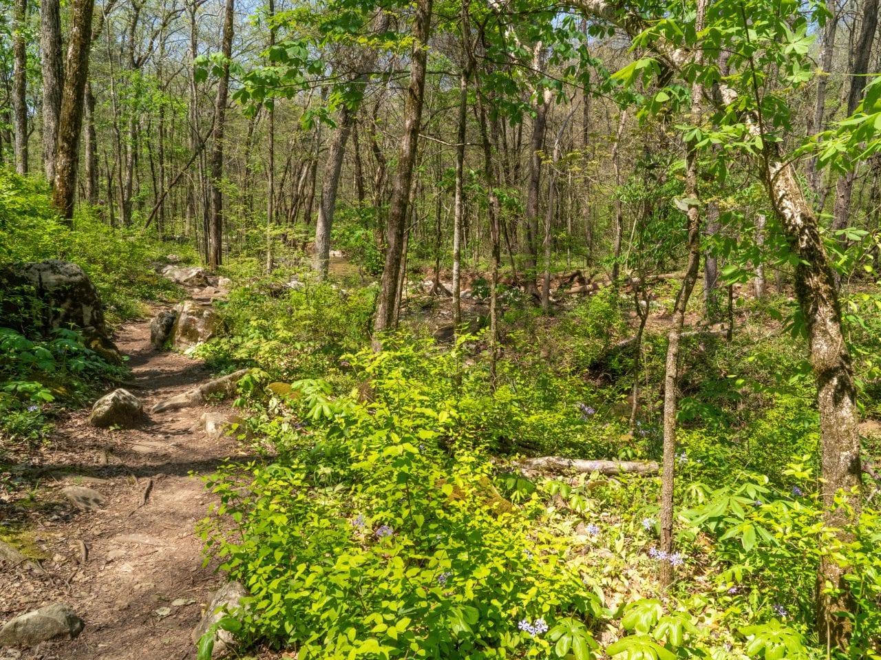 Wildflower Trail-13.2
