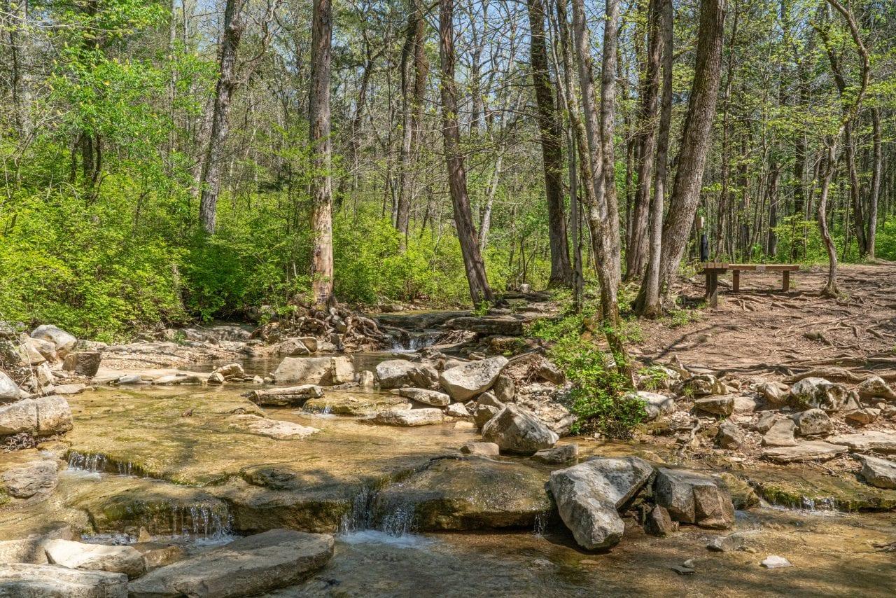 Wildflower Trail-8