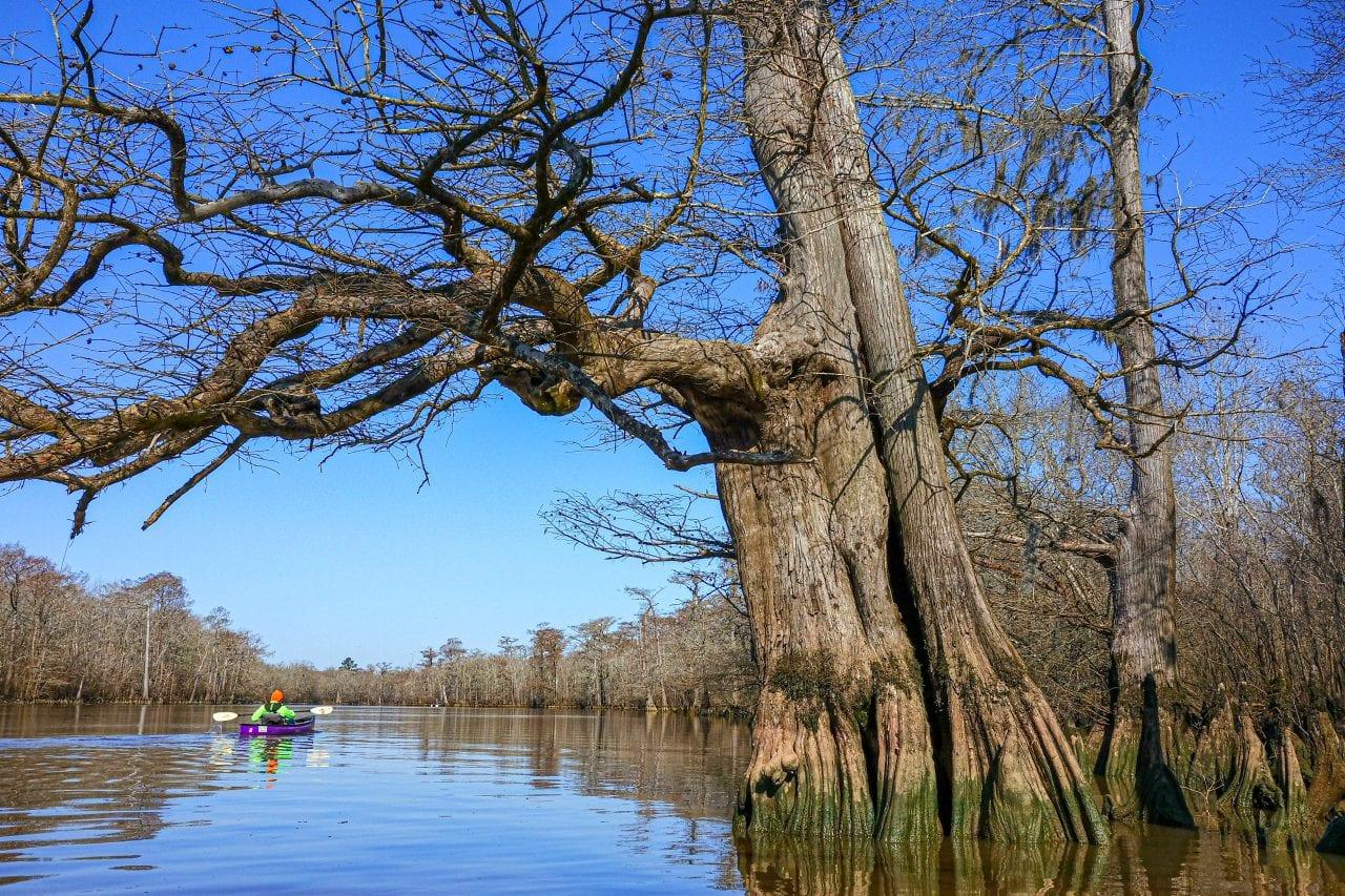Kayaking Big Thicket
