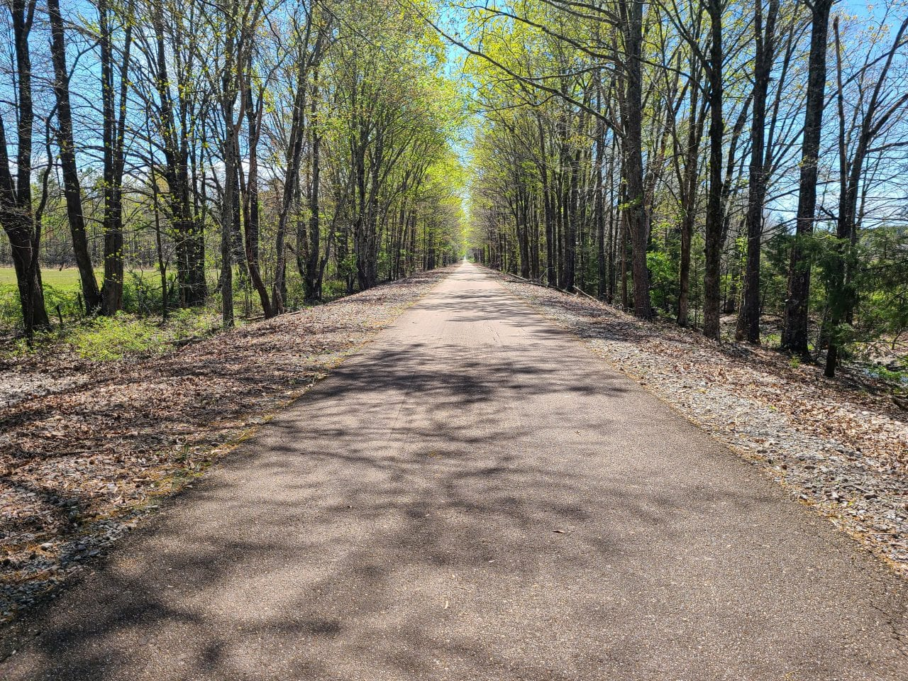 Tanglefoot Trail Section