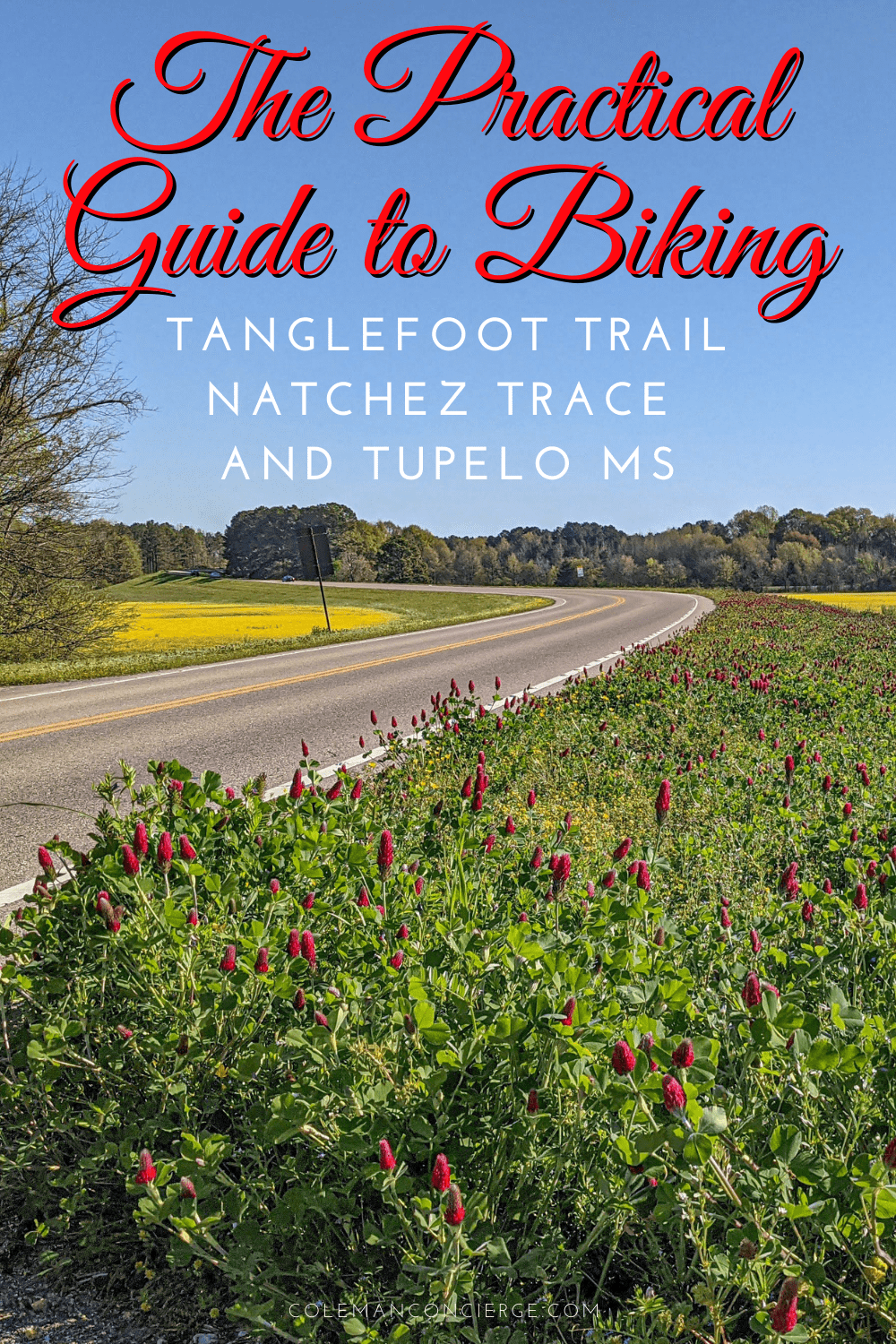 The Natchez Trace road and wildflowers