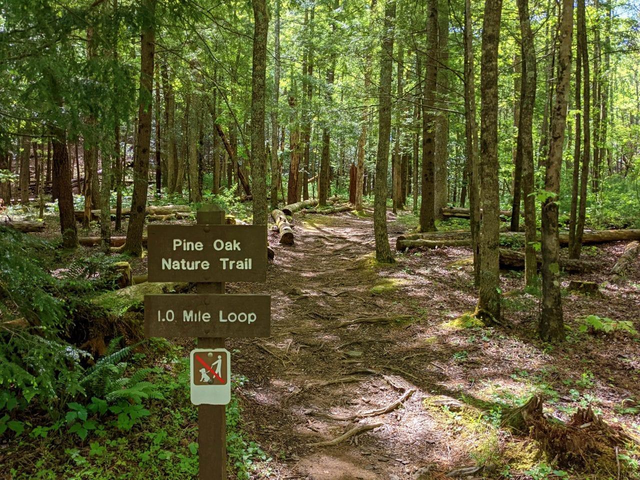 Cades Cove Nature Loop