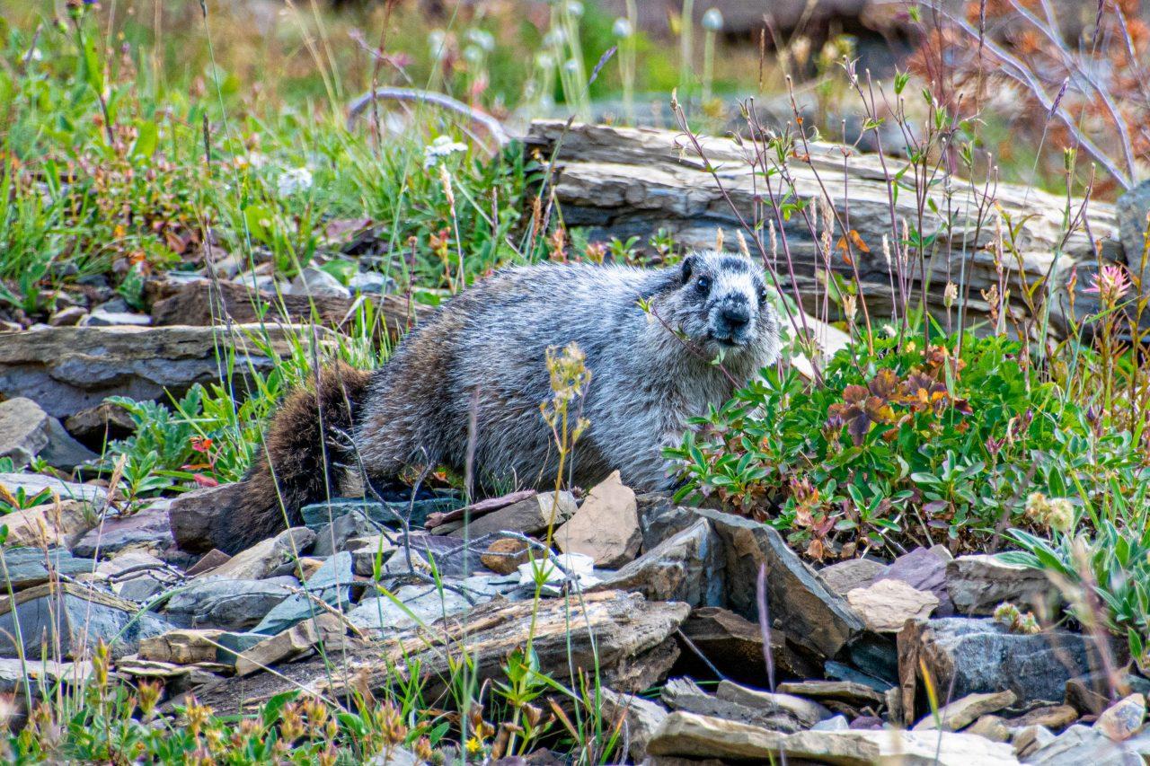 Highline Trail Glacier National Park-81