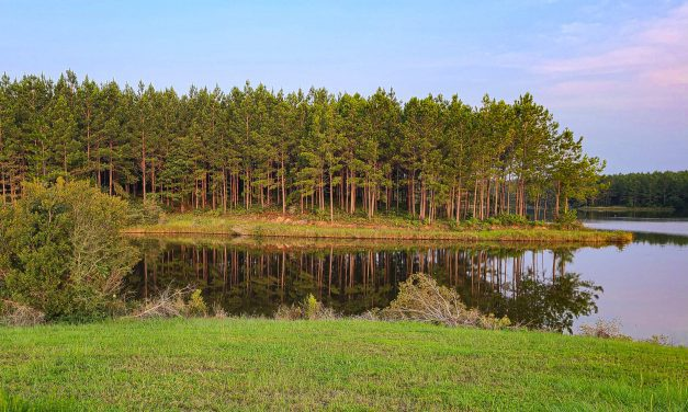Super Fun Things to do in Hattiesburg MS for Outdoor Lovers