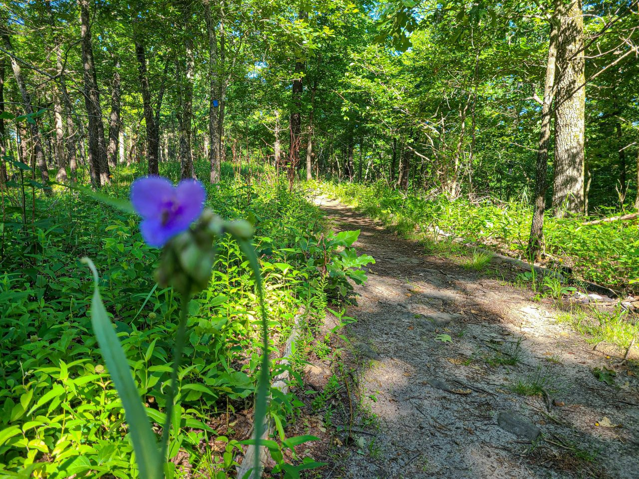 Wildflowers on the Ha Ha Tonka trails